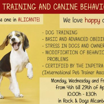 DOG TRAINING AND CANINE BEHAVIOR COURSE IN ALICANTE