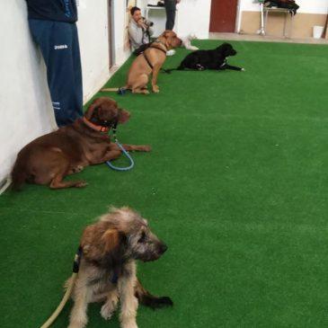 Club de adiestramiento canino en Alicante
