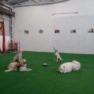 Centro de adiestramiento canino en Alicante