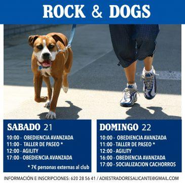 Clases de adiestramiento canino San Vicente del Raspeig