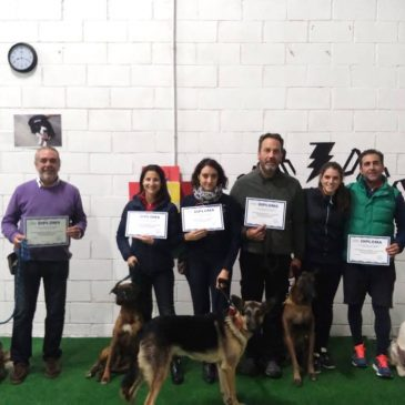 Escuela de adiestramiento canino en Alicante