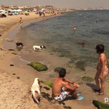 Rock & Dogs Playa en Pregoner.es