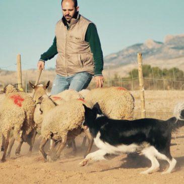 Pastoreo en Alicante