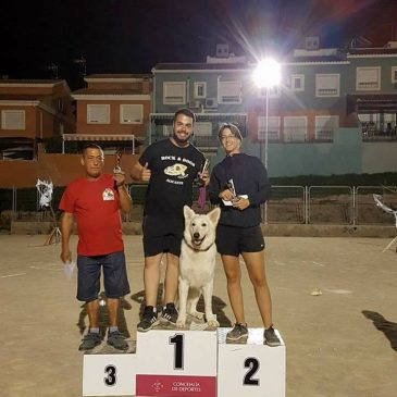 Escuela de adiestramiento de perros en Alicante