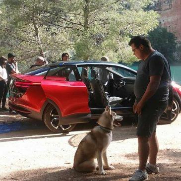 Perros para cine Alicante