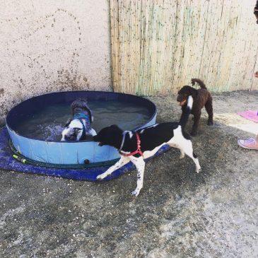 Adiestrador canino en San Juan de Alicante